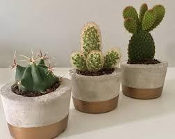 Trio Of Concrete Rustic Cactus Succulent Pots