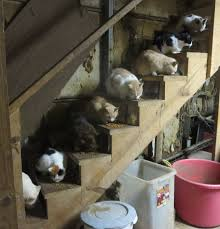 cat stairs gratuitous cat picture stairs rodney s saga