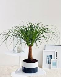 Best Plants For Bathroom Feng Shui by Feng Shui Plants For Harmony And Positive Energy In The Living