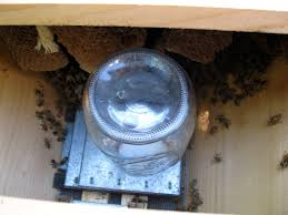 Linda's Bees: September 2010 Bkeeping For Beginners Pt1 Video On How To Build A Top Bar Hive Feeder Set Up Behind Follower Board In Bkeeper Top Bar Hive Melissas Honey Bees Epic Beehive Swarm Trap Youtube How Transfer Brood Comb From Langstroth Frames New 200 Hives The Lowcost Sustainable Way A Bee Keeping Make Favorite Sewisabel Backyardhive And Bkeeeping Supplies Sale To Install Package Beverly Getting Started Your First Year As Beehive By Eco Box Eco Bee Box Modern