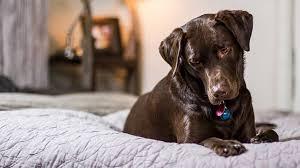 wenn der hund im bett schläft hundemagazin net