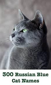 russian cat names russian blue cat names 300 brilliant russian cat name ideas