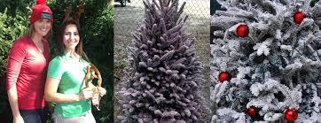 Daves Pumpkin Patch Brandon Fl by Christmas Tree Flocking U003c A U003e