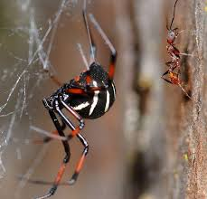 Remains Of The Day Spiders by Spiders South Carolina Public Radio