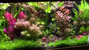 aquarium planté de l aquajungle