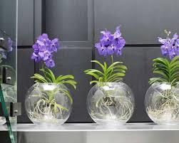 centre de table orchidées vanda mes plantes d amour