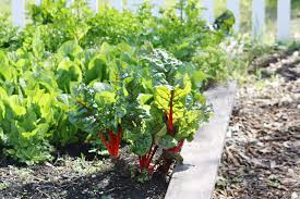 How To Start Ve able Gardening In A Drought