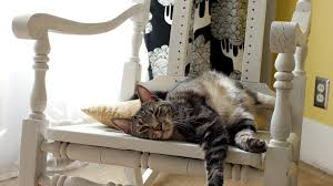 Lazy Cat Sleeps On Rocking Chair And Wakes Up Scared Stock Video Footage -  Storyblocks Video