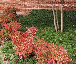 Garden Sense: Fall Color - Shrubs The Beauty Of Four Hands Nandina Home Tricks The Trade Garden Design Ideas In Zimbabwe Pdf Idolza 14 Ndina Lane Huntsville Lake Forest 1084769 With Dwarf Bush Dream Home 27 Best Sunroom Images On Pinterest Acrylics Baby Boom 12 Our Favorite Neighborhood Design Shops In Metro Atlanta Designer Fniture Interior Designers Aiken Chime Heavenly Bamboo Monrovia Mikes Helping Gardeners Help Themselves Family Equestrian Estate