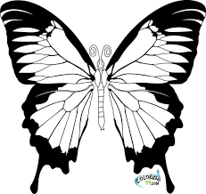 Butterfly Coloring Pages Painted Lady Sits On A Flower Of Stages