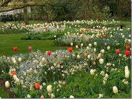 inspiration for fall bulb planting with jacqueline der kloet