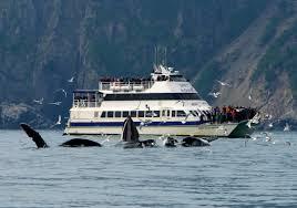 Kachemak Gear Shed Wa by The National Parks Kenai Fjords In Wanderlust
