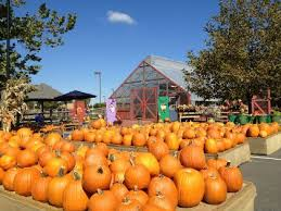 Pumpkin Picking Richmond by Top Pick Your Own Pumpkin Patches Cbs Philly