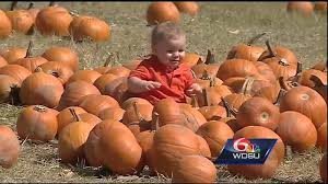 Ms Heathers Pumpkin Patch Louisiana by Corn Mazes And Pumpkin Patches Near New Orleans 2017 Axs