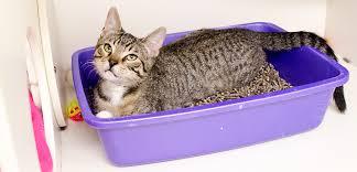Cat Litter Carpet by Litter Box Problems Aspca