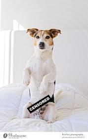 süßer hund im schlafzimmer mit zensiertem