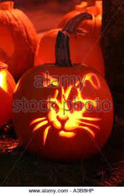 Pumpkin Festival Keene Nh 2017 by Usa New Hampshire Keene Pumpkin Festival Cat Carved In Pumpkin