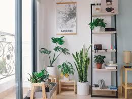 luftreinigende pflanzen hier informieren und sofort kaufen