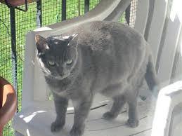 qui pisse sur le canapé chatte craintive qui fait pipi tous les jours nuit sur le canapé ou