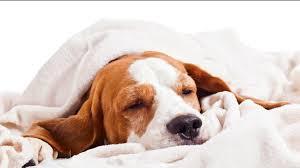 wo hunde und katzen am besten schlafen mdr jump