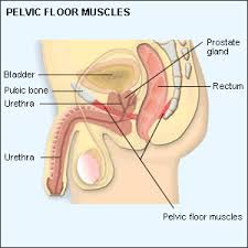 Pelvic Floor Tension Myalgia by Excessive Pelvic Floor Muscle Tension Disorder Carpet Vidalondon