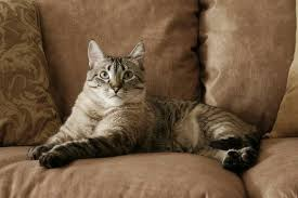 Microfiber Sofas And Cats by What Is A Pet Friendly Leather Sofa Hunker