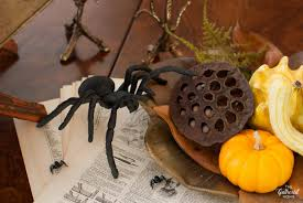 Pumpkin Patch Tarantula Scientific Name by Halloween Dining Room A Study Of The Curious And Curiouser The