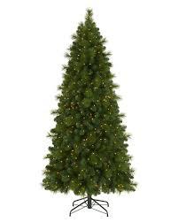 Offers Tall Skinny Christmas Tree Of Foxtail Pine Treetopia