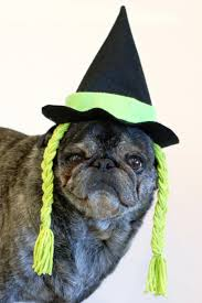 Pug Pumpkin Stencil Printable by How To Make A Halloween Witch Hat For Your Dog How Tos Diy