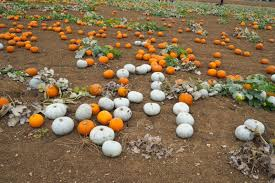 Varieties Of Pumpkins Uk by The Pumpkin Patch U2013 Lucy Jane