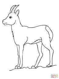 Coloriage Chèvre Chamois Coloriages à Imprimer Gratuits