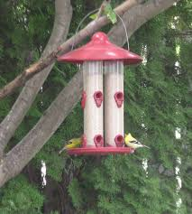 Mother Nature's Bird Feeding News: No Mess Solutions For Backyard ... Some Ways To Keep Our Backyard Birds Healthy Birds In The These Upcycled Diy Bird Feeders Are Perfect Addition Your Two American Goldfinches Perch On A Bird Feeder Eating Top 10 Backyard Feeding Mistakes Feeder Young Blue Jay First Time Youtube With Stock Photo Image 15090788 Birdfeeding 101 Lover 6 Tips For Heritage Farm Gardenlong Food Haing From A Tree Gallery13 At Chickadee Gardens Visitors North Andover Ma