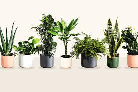 luftreinigende pflanzen top 7 für weniger schadstoffe