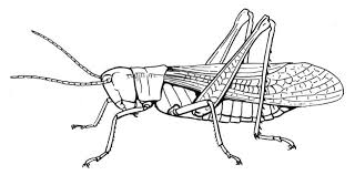 Happy Grasshopper Coloring Page Insect Pages