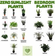 pflanzen fürs schlafzimmer mit bildern pflanzen
