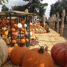 Tucson Pumpkin Patch by 11 Pumpkin Patches To Visit In Arizona