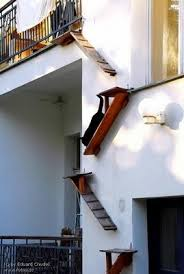 cat stairs caturday felids cat ladders why evolution is true