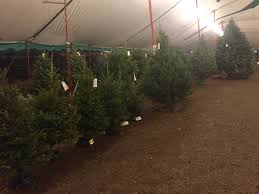Various Sized Trees On Display Inside Miami Christmas