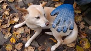 Siberian Cat Hair Shedding by Should I Buy The True Touch Five Finger Deshedding Glove Pet Hair