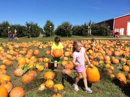 Caledonia Pumpkin Patch by 7 Things To Do With Kids This Fall In Grand Rapids Mi