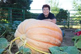 Atlantic Giant Pumpkin Taste by Atlantic Giant Pumpkins Giantveggiegardener
