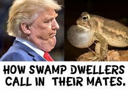 Roast Beef Curtain Meme by How Swamp Dwellers Call In Their Mates Trump U0026 His Swamp