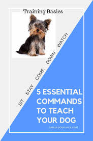 Non Shedding Small Dogs Australia by 5 Basic Dog Commands Every Small Dog Should Know