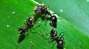 Flying Ants In Bathroom Sink by How To Get Rid Of Ants U2013 Complete Guide To Diy Natural Ant Treatments
