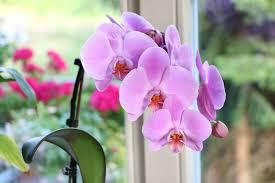 orchideen im schlafzimmer gesund oder schädlich