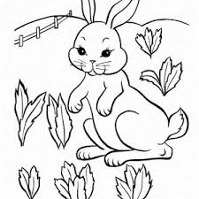 A Pretty Little Bunny In The Carrot Field Coloring Page