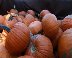 Pumpkin Patch Auburn Al by Springville Pumpkin Patch