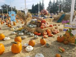 Uesugi Farms Pumpkin Patch by 100 Spina Farms Pumpkin Patch Best Pumpkin Patches Across