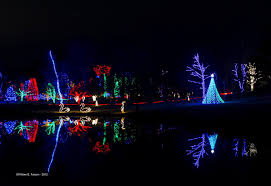 Best Type Of Christmas Tree Lights by Winter Walk Of Lights Nova Parks