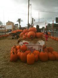 Pumpkin Patch San Fernando Valley Ca by Van Nuys Pumpkin Patch Pumpkins A Petting Zoo And Carnival Slides